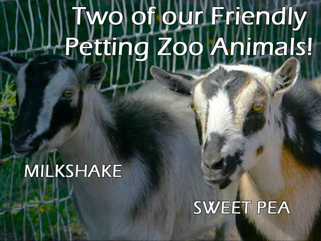 Petting Zoo Animals- Milkshake & Sweet Pea