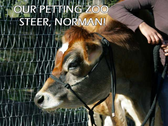 Petting Zoo Animals- Norman